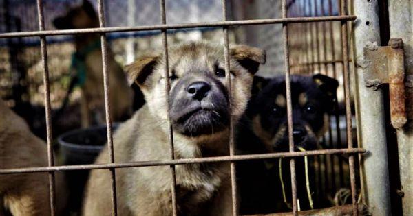 Hampyeong-gun, South Korea, Shut down the illegal dog farms!