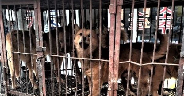 Budapest, Tell Friendship City, Seoul, S.Korea, That We're Opposed to the Torture of Dogs.