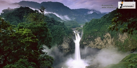 Save the Yasuní-Initiative to protect Ecuador's Yasuní National Park and prevent the drilling of oil in this area!
