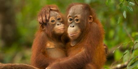 Sauvez la forêt tropicale de Sumatra