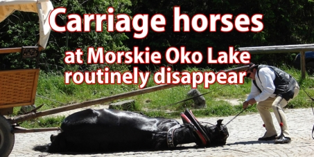 Ban The Carriage Horse Transport to Morskie Oko Lake in the Tatra National Park in Poland