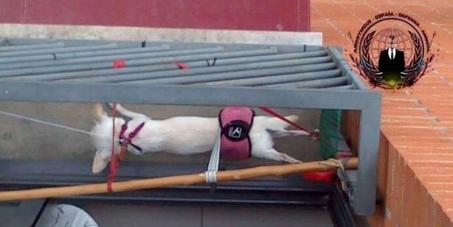 Justicia para Kila y Lola, las dos chihuahua torturadas en Barcelona