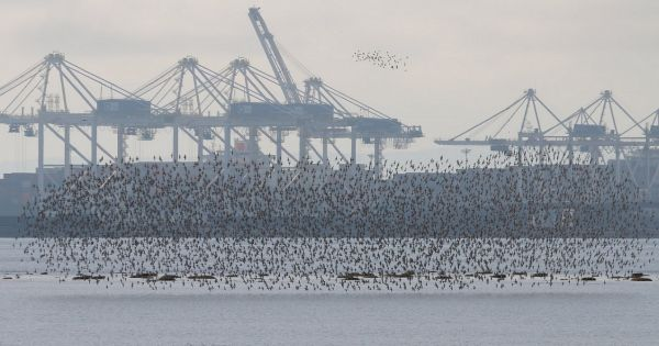 Refuse Roberts Bank Terminal 2 (RBT2) and save the Fraser River Estuary!