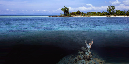 Protect Our Pacific Ocean! Stop Experimental Seabed Mining!