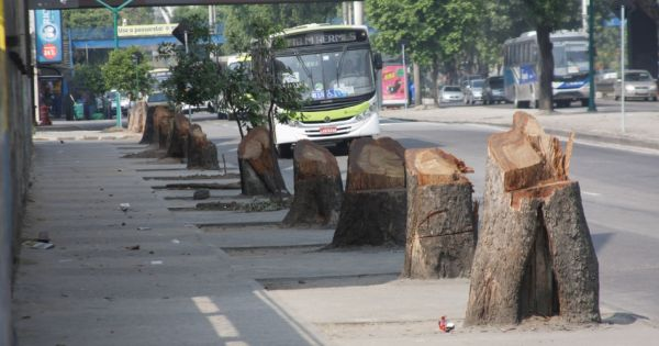 Parem com o extermínio de árvores no Rio de Janeiro!