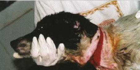 Stop the barbaric and cruel treatment of Spanish hunting dogs