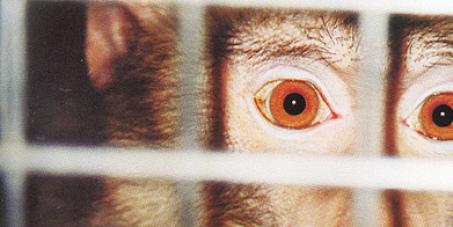 Regione Toscana, non finanziare ricerche con sperimentazione animale della Novartis Siena