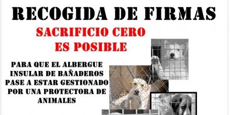 """Queremos que una protectora de animales gestione la perrera de Gran Canaria (""""Albergue"""" de Bañaderos)"""