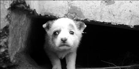 Убрать из Интернета пропаганду жестокости к животным