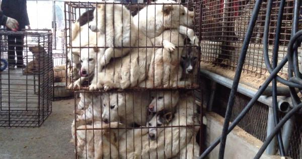 Chilgok, South Korea, Shut down the illegal dog farms!