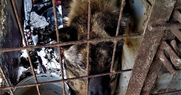 Samcheok, South Korea, Shut down the illegal dog farms!