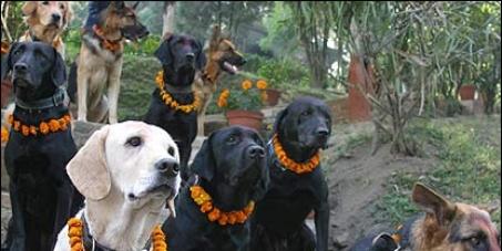 STOP KILLING STRAY DOGS IN NEPAL !!!