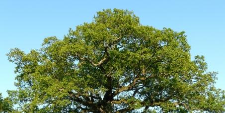 Baumverordnung soll bundesweit pflicht werden heimischen for Alberi simili alle querce