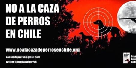 """Gobierno de Chile: Solicitamos la abolición de la nueva ley de caza de perros """"salvajes"""""""