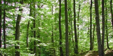 Il faut sauver la forêt des Hirondelles!