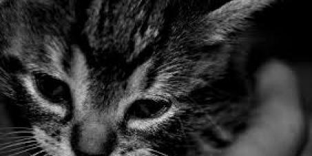 Contra la experimentación animal en Chile