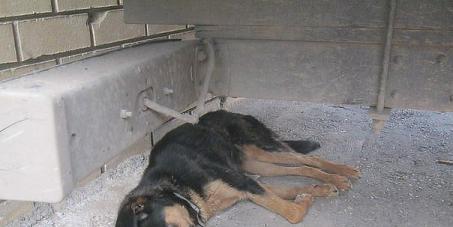 К президентам России В. Путину, Белоруси А. Лукашенко: измените закон по наказанию за жестокое обращение к животным