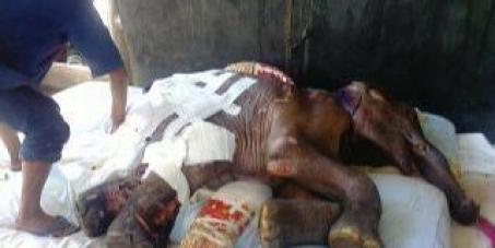 Action against the Department of National Parks, Wildlife and Plant Conservation for poorly treating a baby elephant