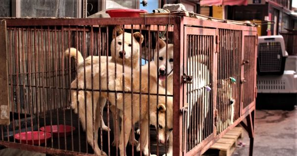 Taipei, Tell Sister City, Seoul Korea, That We're Opposed to the Torture of Dogs and Cats.