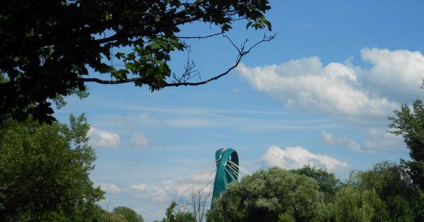 Chcemy więcej drzew w Bydgoszczy!