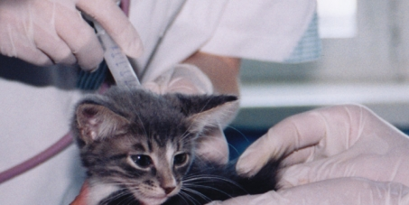 Stop Animal Experiments at Cardiff University.