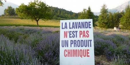 Help save lavender, aromatic and medicinal plants