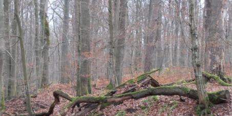 """Bayerischer Ministerpräsident Horst Seehofer: Fortbestand des Schutzgebietes """"Der Hohe Buchene Wald"""" im Ebracher Forst"""