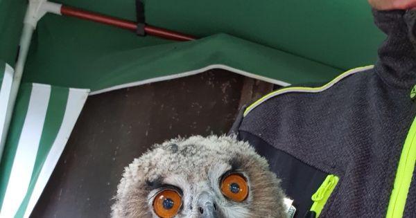 Rettet den Vogelschutz Fingermann