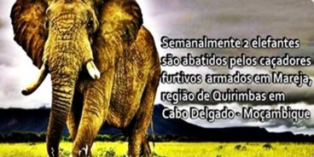 O massacre dos elefantes em MAREJA-QUIRIMBAS-Moçambique