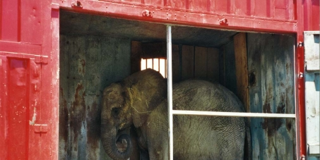 Interdire les animaux sauvages dans les cirques en France. Ban wild animals in circuses in France.