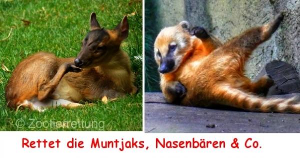 EU-Kommission in Deutschland Herr Hönighaus: Aussetzen der EU-Verordnung 1143/2014 in europäischen Zoos/Tierparks