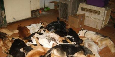 Quiero que dejen de sacrificarse animales en las perreras unicamente porque esten saturadas y sin ningún otro motivo.