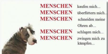 Keine Einschläferung der Listenhunde in Tierheimen.