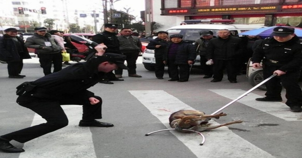 STOP ANIMAL CRUELTY - Brutal killing of animals in China!