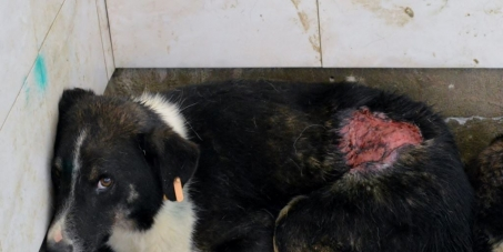 Director Gabriel Gritcu: Help the dogs currently suffering unimaginably at Bacau Shelter