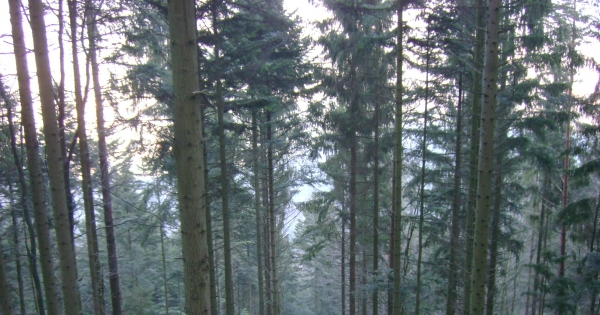Directeur général de l'ONF: Maintien du Campus ONF - Formation forestière