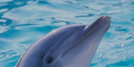 An Japans Premierminister Shinzo Abe: Stop dem Delphin-Massaker