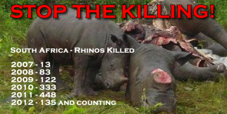 Rhino Poaching : Act NOW to STOP The Killing!