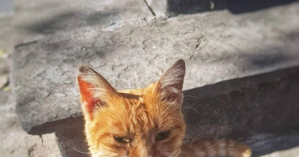 Save the Strays of Rhodes Island, Greece
