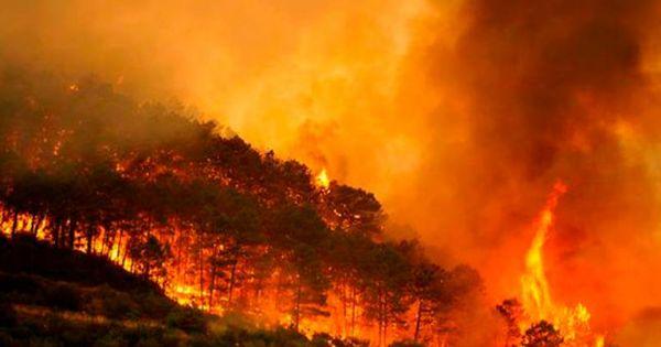 México indefenso sin presupuesto ambiental