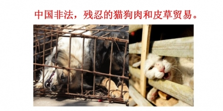 Outlaw the horrific dog and cat meat and fur trade within China