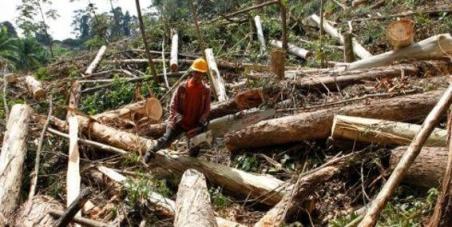 En contra de la tala de árboles en colombia