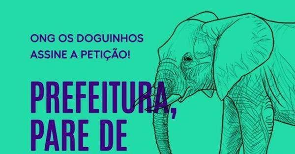 Prefeitura de Ribeirão Preto, comece a agir e libera a Elefanta Bambi #liberabambi