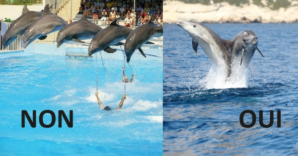 NON à la création du delphinarium d'Agadir / NO for a dolphinarium in Agadir
