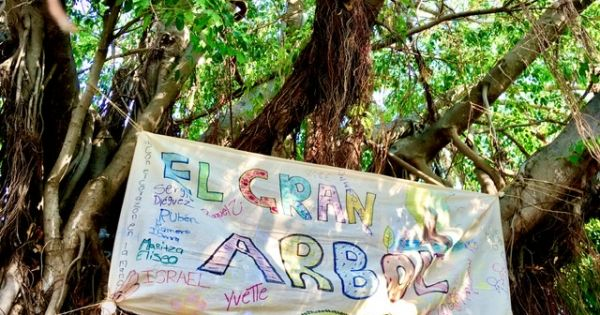 Petición para conservar los árboles Endémicos por tala de Construcción Arroyo Jabalines.