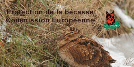 Protection de la bécasse des bois en Europe