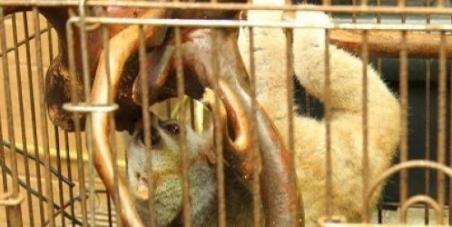 World Wildlife Fund: Save the Slow Loris in Maldives