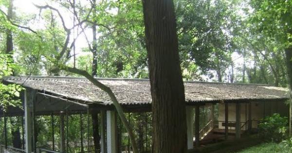 Transforme a antiga bocha do Parque da Aclimação em um espaço mais verde e mais saudável!