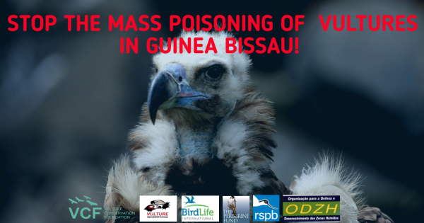 Stop the Mass Killings of Critically Endangered Vultures in Guinea-Bissau!