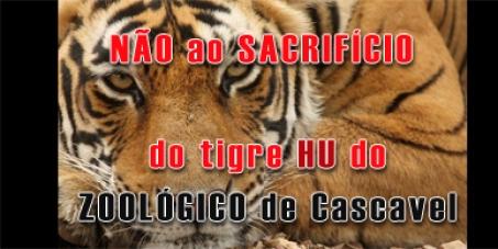 IBAMA: NÃO permita que o tigre HU do ZOOLÓGICO de Cascavel seja SACRIFICADO.
